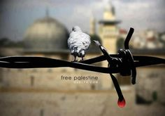 Before the last drop Meaningful Pictures, The Last Drop, Apartheid, Palestine, Freedom, Notes, Strong, Facebook, Liberty
