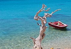 The tree and the boat Greek Islands, More Photos, Beautiful Images, Greece, Boat, Greek Isles, Greece Country, Dinghy, Boats