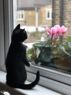 How can i tell if my cat is nervous? Did you notice that cats sometimes act a bit weird? Can they be nervous the same way as humans? Is it different with kittens? Funny Pictures Of Women, Architecture Images, Cat Facts, Montage, High Quality Images, Cats And Kittens, Free Images, I Can, Windows