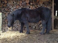 Dit is Edison fell pony