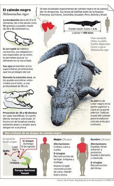 El caimán negro