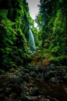 Los Tilos. La Palma, by Elba Fragoso.... #nature #green #waterfall #longexposure #canaryislands #naturephotograph #naturepics
