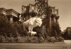 Statue of a bison at the Panama Pacific International Exposition (1915) via @sfpubliclibrary