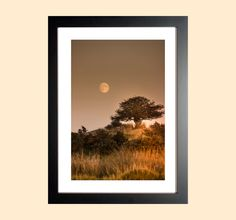 Original Photo Print Moorland art moon by AmbiancePhotography Moon Print, Fall Photos, Photographic Prints, Landscape Photography, Fine Art Prints, Autumn, Rustic, The Originals, Vintage