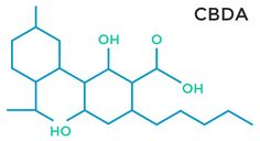 THCA the most abundant non-psychoactive cannabinoid found in marijuana, has demonstrated its potent neuroprotective ability in a recent study. Medical Marijuana, Cannabis, Medicinal Plants, Study, Medicine, Articles, Blog, Studio, Ganja