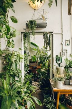 """livingwithplants: """" aestatestudio: """" Daily inspiration. Learn more about the project www.aestate.be """" In a few years my place will probably look like that if I don't stop collecting plants :p """""""