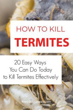 Signs Of Termites, Types Of Termites, Household Cleaning Tips, Cleaning Hacks, Diy Termite Treatment, Termite Control, Pest Control, What To Use, Bullet Journal Books