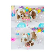 Dog Birthday Cake | Puppy Cake Smash | Dog Birthday Party Inspiration | One Stylish Party | Cavalier King Charles Spaniel | Cleveland, Ohio Studio | Start With The Best | Brittany Gidley Photography LLC