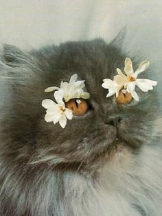 flower child cat - looove this kitty, so pretty she belongs on this board (: