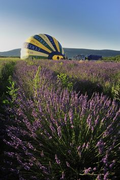 Among the fragrant lavender fields, this balloon starts its journey!  #loccitane en #provence
