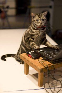 Peut-on aller sur l'ordinateur d'un collègue pendant qu'il est en vacances ? ? J'éshite ...