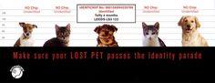 Kedi Mikroçip Kimlik Sistemi Hakkında Her Şey