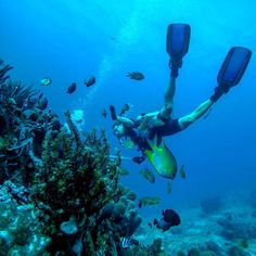 Awesome shot of Brian a Rails developer from Atlanta Scuba diving in the more remote town of Amed in East Bali. #beautiful #diving #coral #blue #deepbluesea #breathtaking #snorkel #fins #scubadiving #padi #fish #reef #coralreef #deep #scuba #bali #amed #indonesia #southeastasia #exciting #adventure #explore by hackerparadise