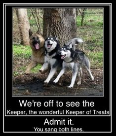 German Shepard, Alaskan Malamute, and Siberian Husky. My future dogs! Funny Animals With Captions, Funny Animal Memes, Animal Quotes, Cute Funny Animals, Funny Animal Pictures, Funny Cute, Funny Shit, Funny Dogs, Funny Memes
