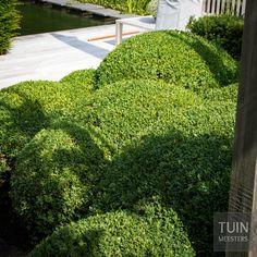 Buxuswolk in één van onze gerealiseerde tuinen