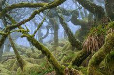 Dartmoor National Park, Devon, UK