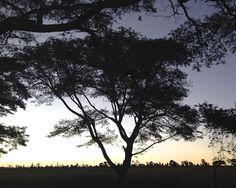 Sunset Silhouette, taken in Harare, Zimbabwe