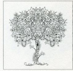 Secret Garden Artists Edition A Pull Out And Frame Coloring Book