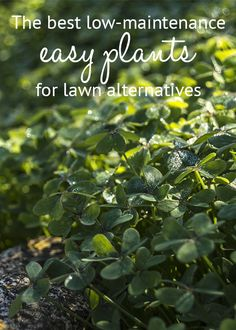 The best low-maintenance easy plants for lawn alternatives. Dig up your grass and replace it with these no-mow plants!