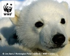 Klout influencers helped the World Wildlife Fund save the arctic by encouraging others on their social networks to reduce their environmental impact. #WWF