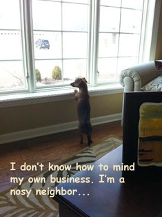 Dog Shaming features the most hilarious, most shameful, and never-before-seen doggie misdeeds. Join us by sharing in the shaming and laughing as Dog Shaming reminds us that unconditional love goes both ways. Pet Memes, Funny Memes, Pet Humor, Dachshund Funny, Dachshund Love, Daschund, Funny Animals, Cute Animals, Animal Memes