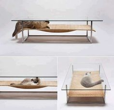 This Coffee Table for Cats by E&Y is Perfect for Any Pet Owner ...not sure the animal would like the clonking of items being put on/taken away from just above it though.....