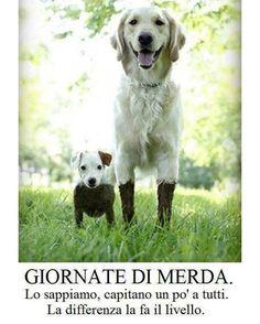 #ridichetipassa #foto #vignette #divertenti #humor #sorriso #video #risata #coppia #uomo #donna #amore #cane #cani #gatto #gatti #animali #tradimento #matrimonio #Cuccioli #bimbo #facebook #amico #amicizia #amiche #mamma #madre #famiglia #casa