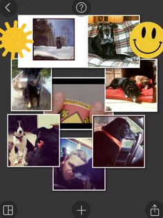 pic collage dogs