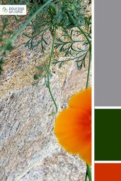 Palette de couleurs gris, vert et orange. Trouve la palette de couleurs idéale pour ta marque à l'aide de ce tutoriel pas à pas. Aide, Plant Leaves, Plants, Inspiration, Logo, Gray Green, Praying Mantis, Bird Puppet, Photography