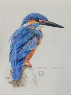 A kingfisher wild bird portrait drawing painting Bird Pencil Drawing, Color Pencil Sketch, Bird Drawings, Colorful Drawings, Animal Drawings, Love Birds Drawing, Pencil Sketching, Realistic Drawings, Kingfisher Bird