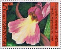 Znaczek: Dactylorhiza romana (Bułgaria) (Orchids) Mi:BG 3441A,Sn:BG 3140,Yt:BG 2987,Sg:BG 3318,AFA:BG 3349