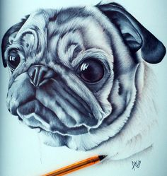Biro ballpoint pen pug drawing by angelfaces1986.deviantart.com on @deviantART