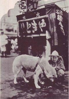 12 Heartbreaking Photos Of Hachiko, The Dog That Waited For His Owner For Years Japanese Akita, Japanese Dogs, Rare Photos, Dog Photos, Hachiko Dog, Schnauzer, Hachi A Dogs Tale, Pitbull, A Dog's Tale