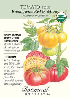 $1.89 80 days. Winner of many taste tests, this pinkish/red, extra large tomato has earned its blue ribbon - fabulous flavor!