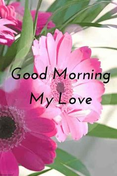 Good morning my love with beautiful hd flowers. Gud Morning Pics, Good Morning Romantic, Good Morning Kisses, Good Morning Nature, Good Morning Love Messages, Good Morning Beautiful Images, Good Morning My Love, Good Morning Quotes, Morning Messages