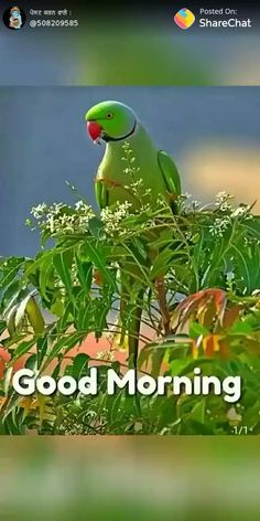 Sweet Good Morning Images, Good Morning Coffee Gif, Beautiful Morning Messages, Good Morning Images Flowers, Latest Good Morning Images, Cute Good Morning Quotes, Good Morning Beautiful Quotes, Good Morning Roses, Good Morning Prayer