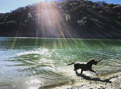 Del Valle Livermore, Our fav go to place for dog water fun & alone time hikes