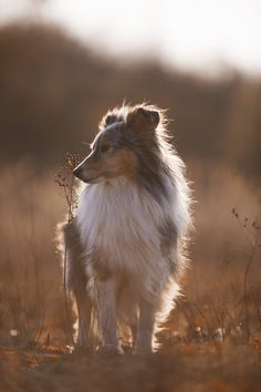 Beautiful Jou : (©) Daria Kusch / 500px link to original photo with photographer on 500px http://500px.com/photo/65156763/beautiful-jou-by-daria-kusch?from=user