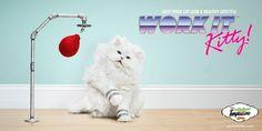 """Производители кошачьего корма Temptations предложили программу аэробики для кошек: """"Работай, котик! Помоги своему коту вести здоровый образ жизни"""""""
