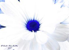 Beautiful flower expressed through my eyes.