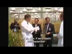 Do you ever wonder how GMOs came to be approved and hidden in our food supply? Two words: substantial equivalence. Watch this video to see the beginning of the deregulation and contamination of our food supply. Please share! ~George HW Bush - Genetically Modified Food Deregulation (1992).mp4