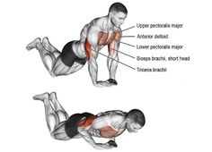 Diamond push-up on knees. A compound Target muscle: Triceps Brachii. Synergists: Lower Pectoralis Major, Upper Pectoralis Major, and Anterior Deltoid. Dynamic stabilizer: Biceps Brachii (short head only). Fitness Hacks, Fitness Workouts, Fitness Motivation, Compound Exercises, Knee Exercises, Lower Chest Exercises, Knee Stretches, Best Chest Workout, Chest Workouts