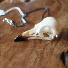 Magpie skull necklace