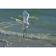 Egret in Surf Photograph on Canvas from OurBoatHouse.com