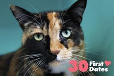 Gretchen has been adopted from the Seattle Humane Society :-)