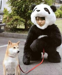 Sesame shiba & panda