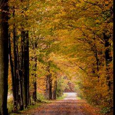 Autumn, near Waterloo Ontario