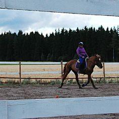 Blurry is good  . . . #natathefinnhorse #finnhorse #horsesofinstagram #horses…