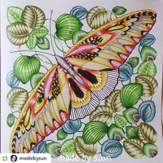 1000 Images About Millie Marotta Colourings On Pinterest