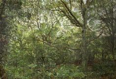 Michael Garton Woodland Clearing oil on canvas, 104.5cm x 102cm Collection RWA Bristol